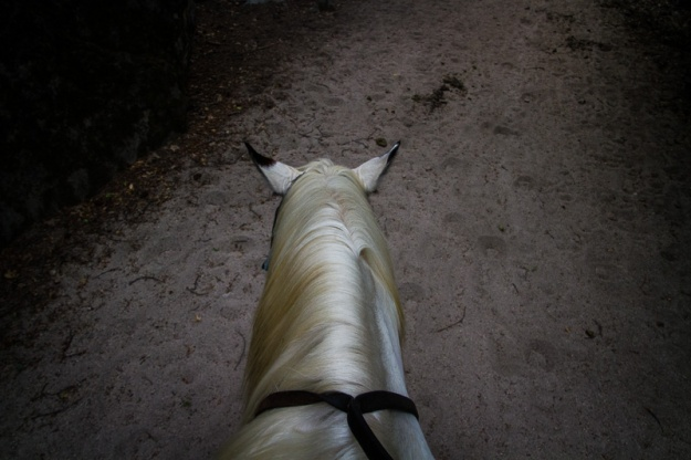 Trail Ride-9